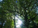 exmoor trees